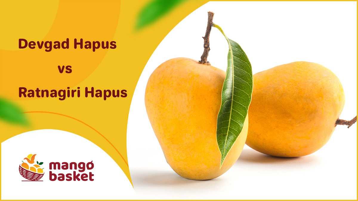 Devgad Hapus vs Ratnagiri Hapus