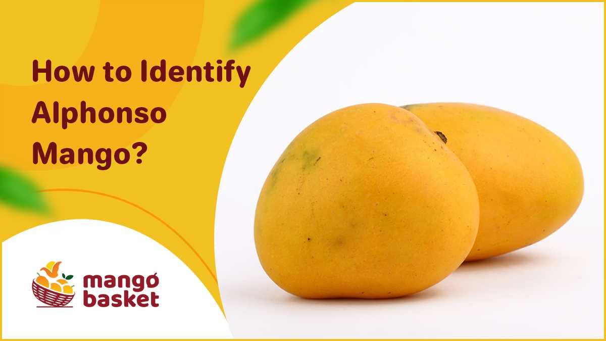 Identify Real Alphonso Mango