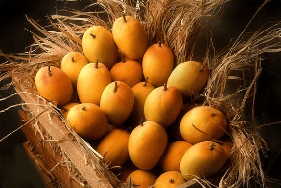 Truk of Mangoes