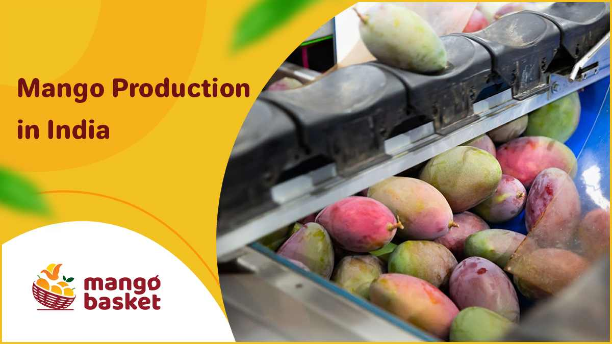 Mango Production In India
