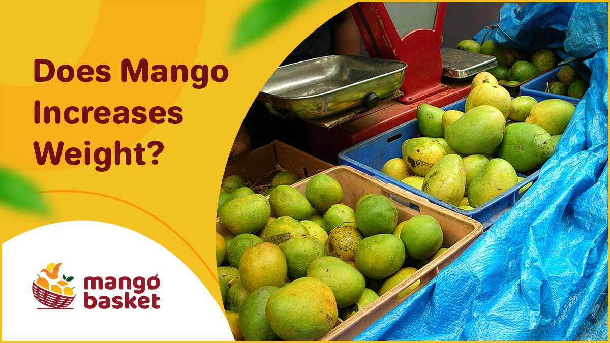 Does Mango Increases Weight?