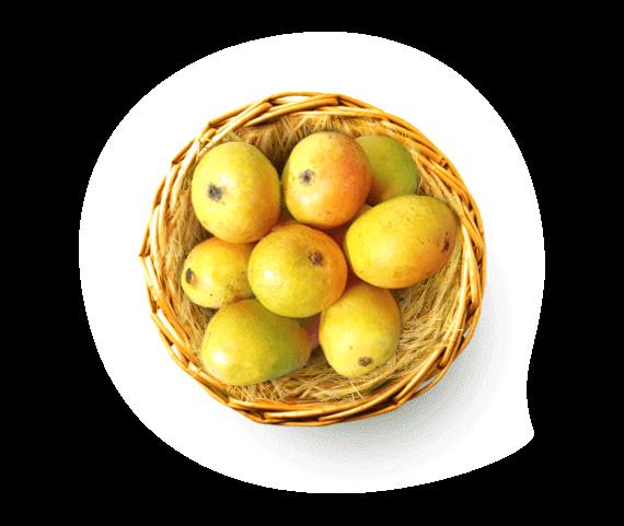 Goa Mankurad Mango