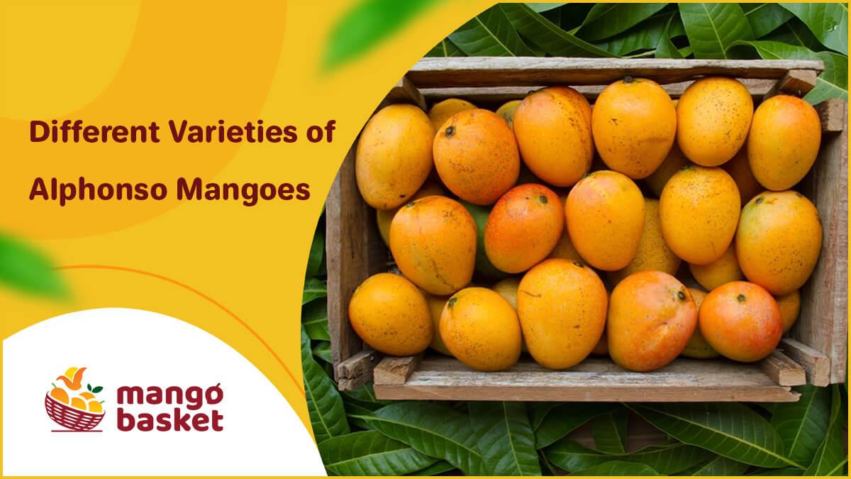 Alphonso Mango Varieties