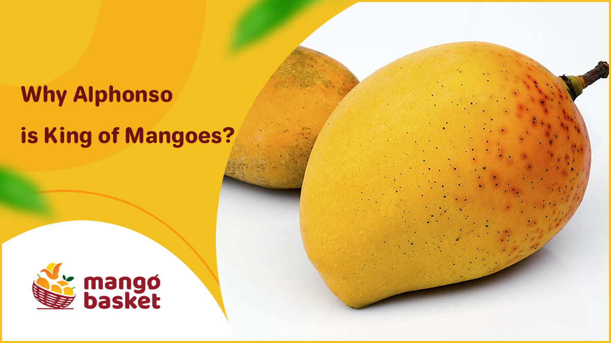 King of Mangoes